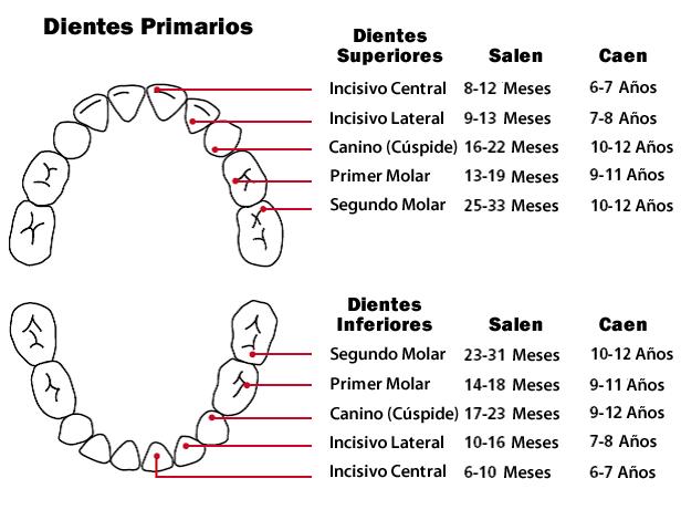 dientesdeleche